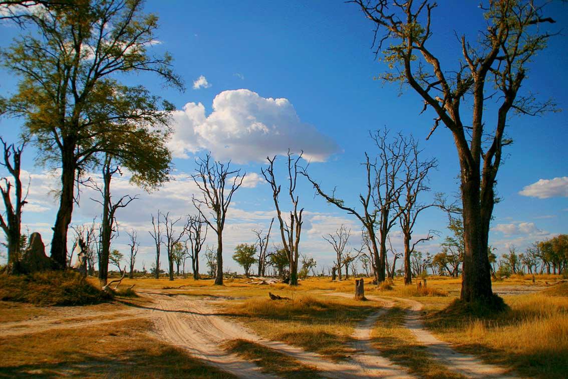 Dead Tree Island bei Xakanaxa