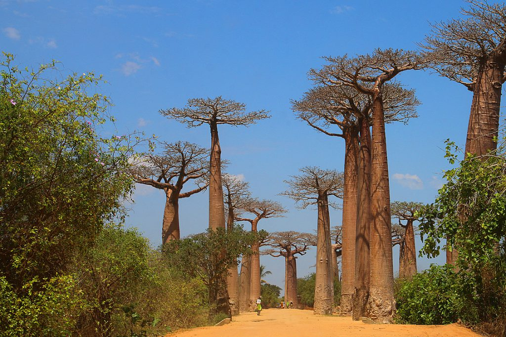 Madagaskar, Baobab-Allee