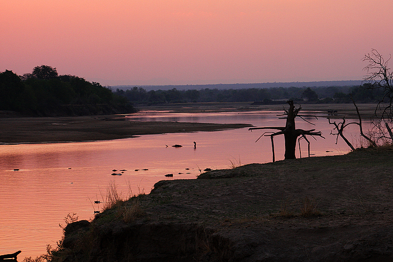 Abends am Luangwa, South Luangwa NP