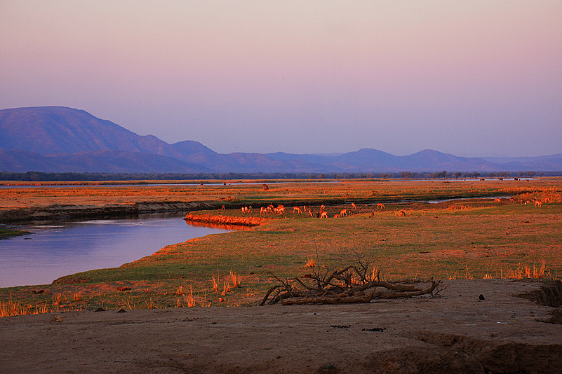 Abendlicht, Mana Pools NP