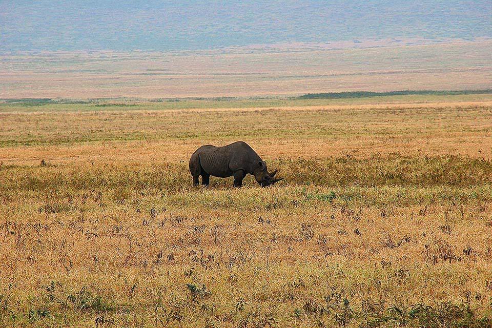 Rhino, Ngorongoro Krater