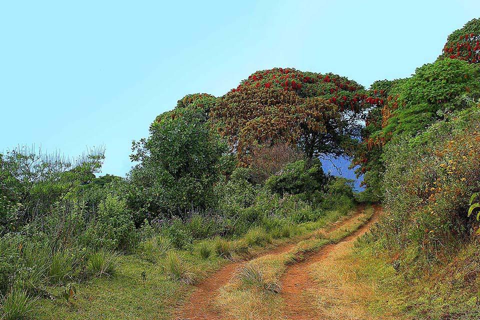 Wald am Kraterrand des Embakaai
