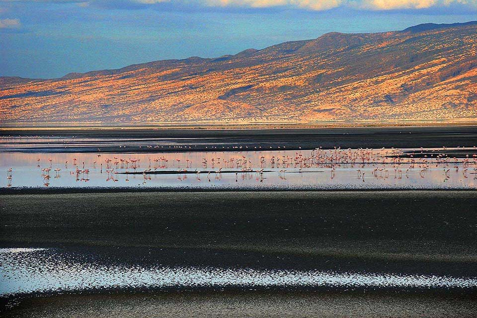 Flamingos, Lake Natron