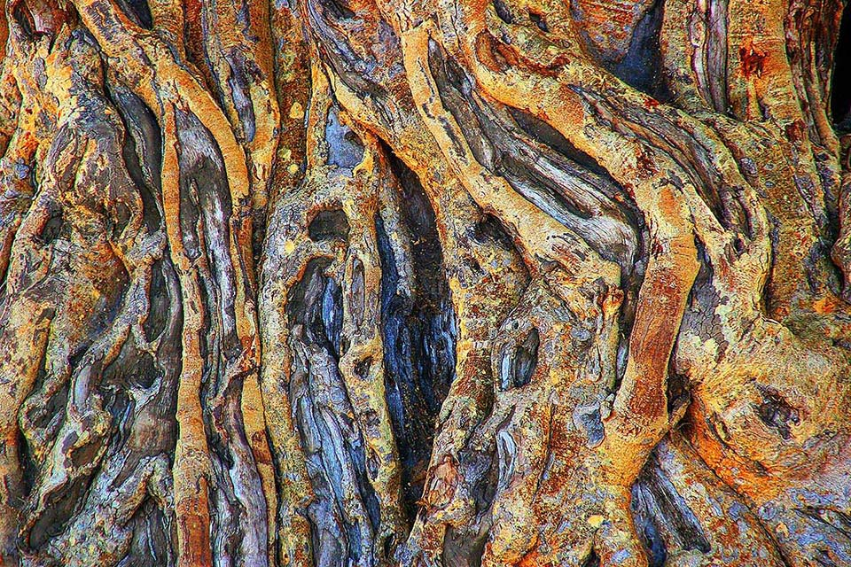 Arg mitgenommene Baobabrinde