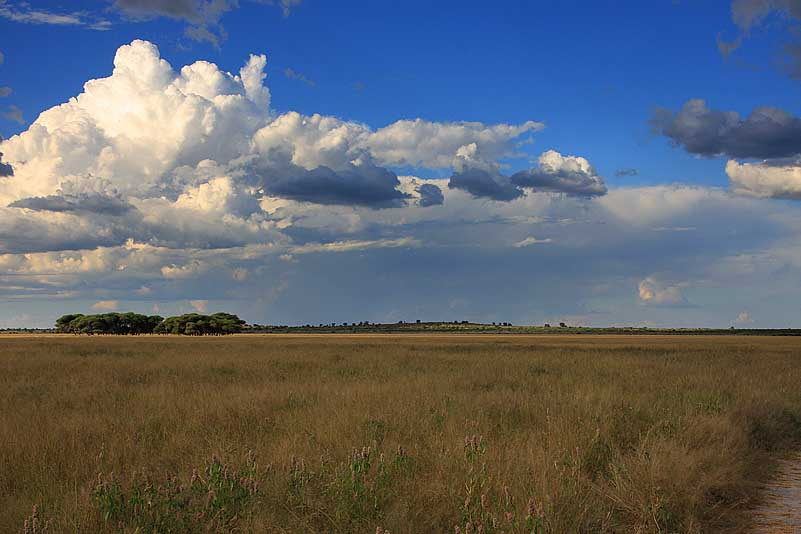 Central Kalahari GR