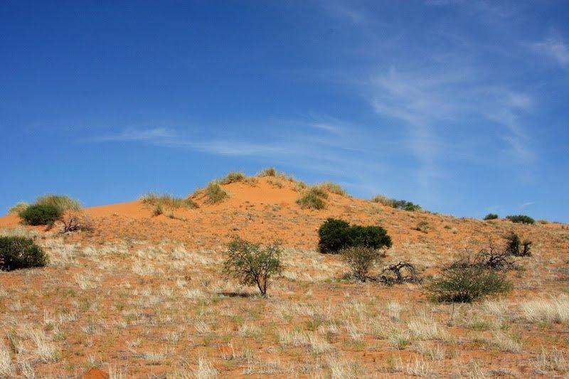 Kalahari-Dünen