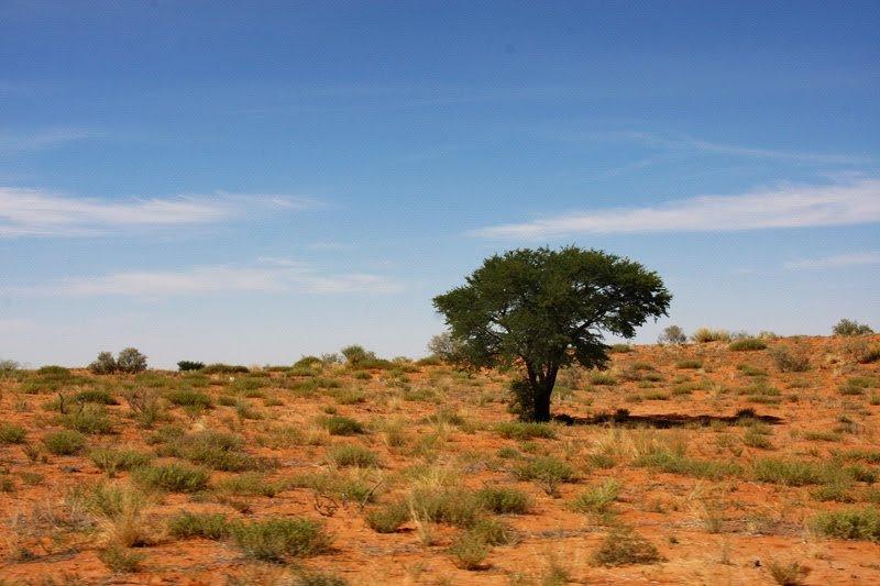 Kaum zu sehen: Löwenrudel im Schatten