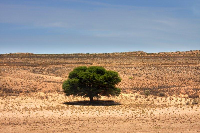 Farbkontraste in der Kalahari