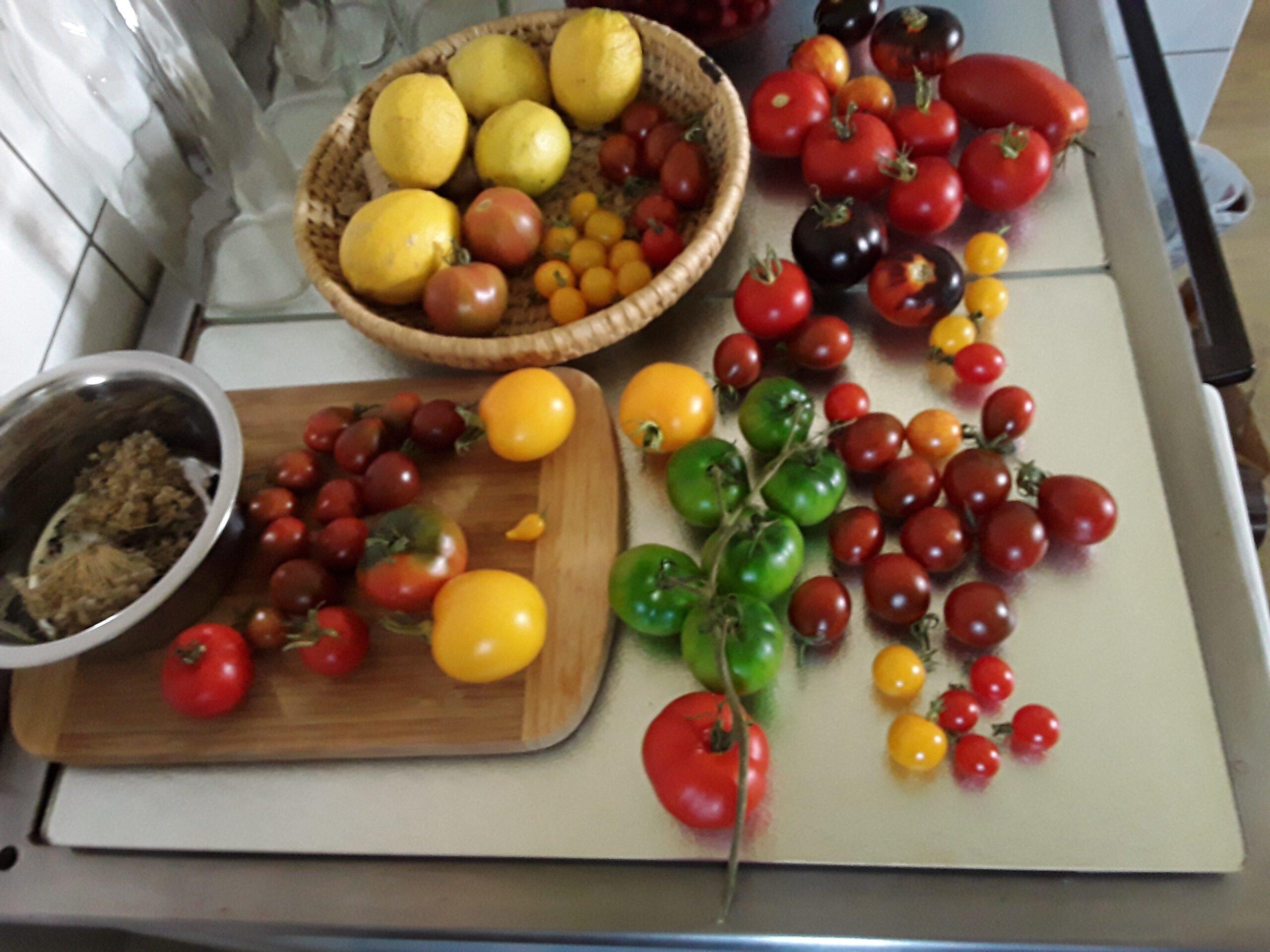 Tomaten aus Heinz' Garten