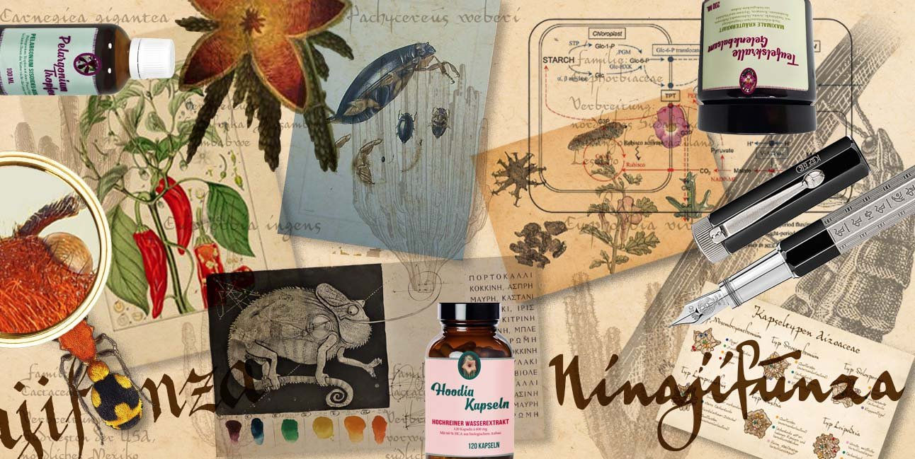 Ninajifunza Titelmotiv - Die private Forschungsecke