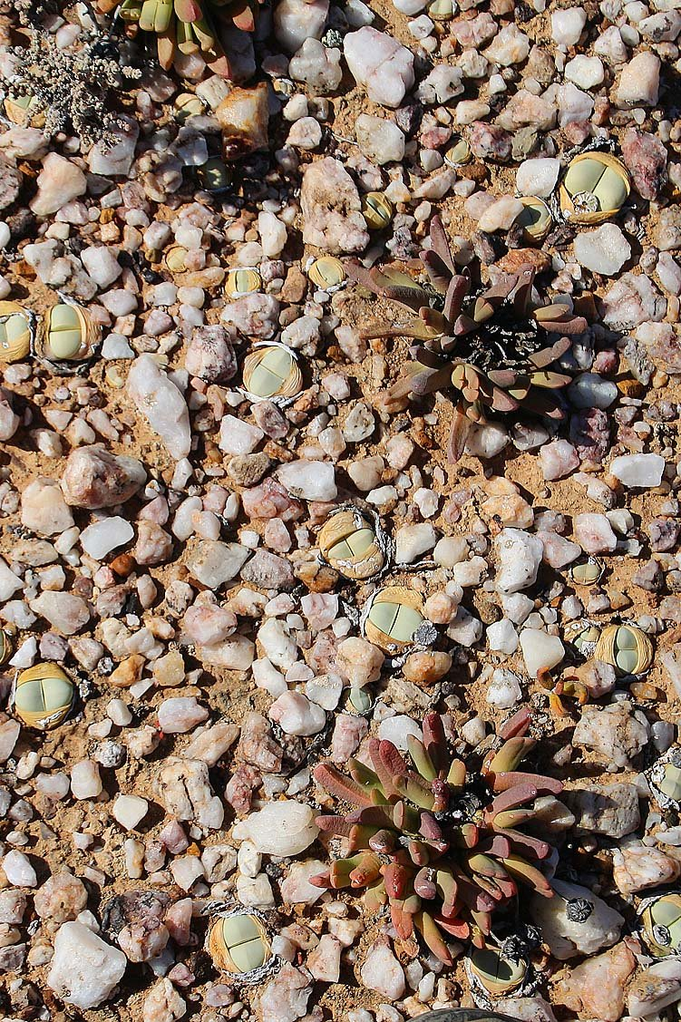 Quarzfläche Knersvlakte