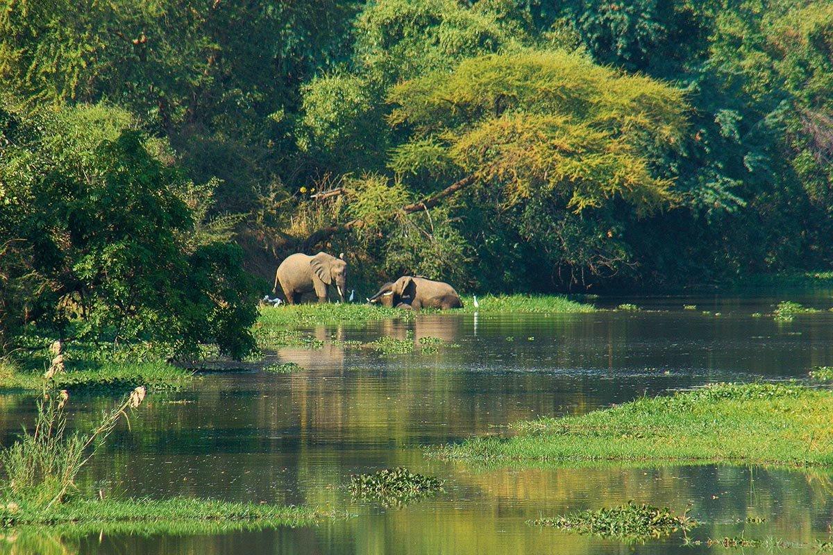 Elefantenparadies; Lower Zambezi NP