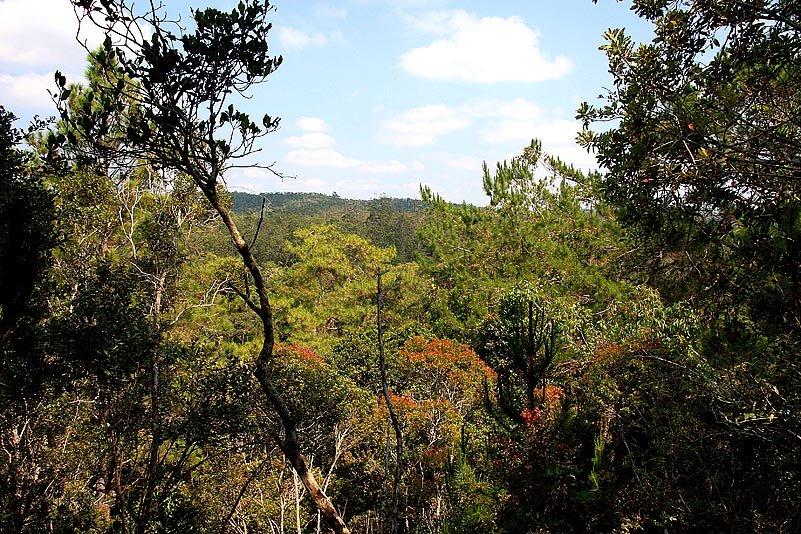 NPDer Wald im Analamazaotra