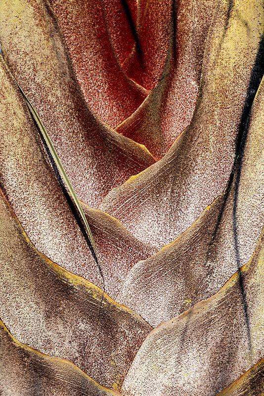 Ein Detail aus der Blattbasis der Ravenala