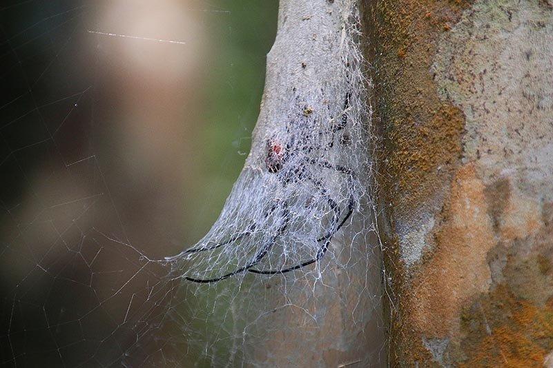 Spinne unter dichtem Gespinst