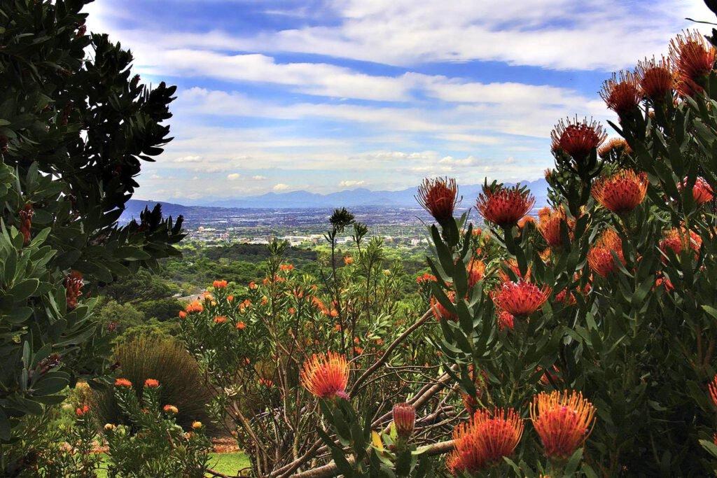 Kirstenbosch Botanical Garden - Blick auf Kapstadt