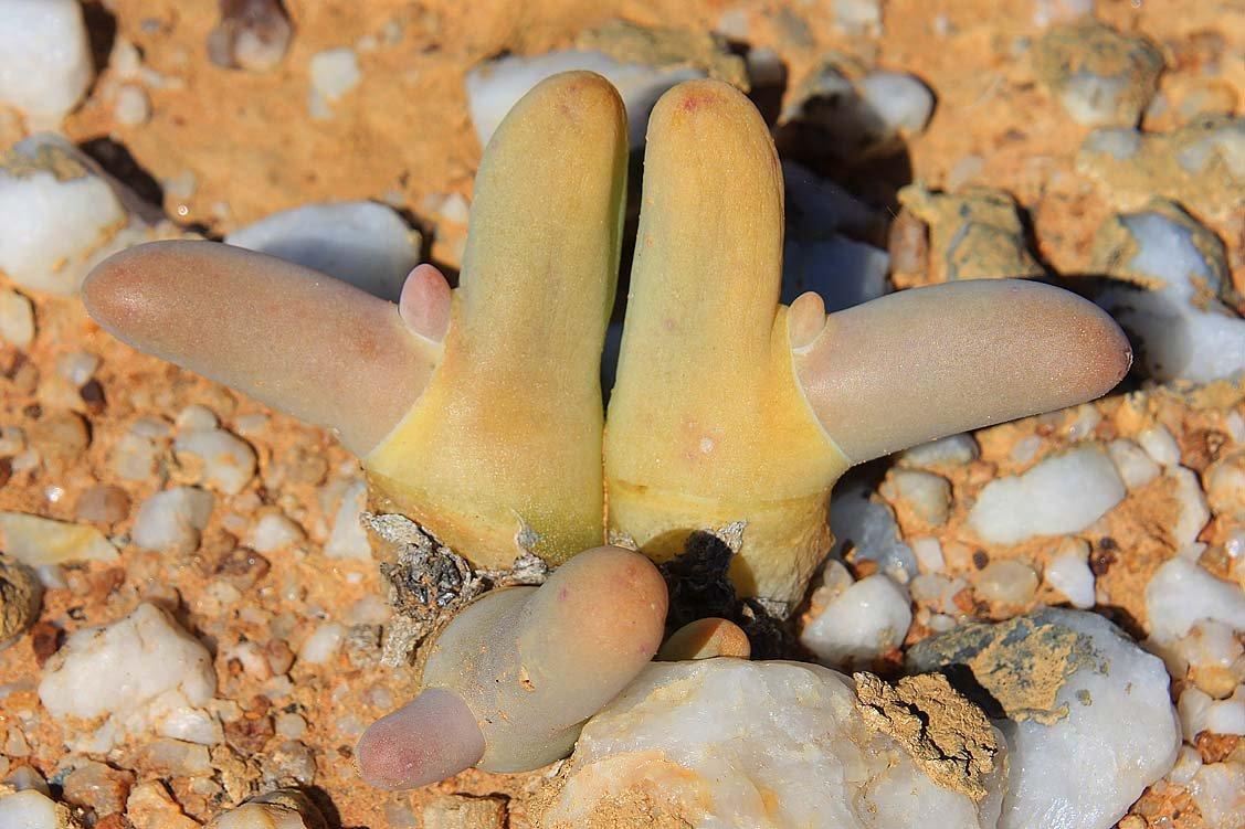 Knersvlakte - Leben am Rand der Quarzfelder